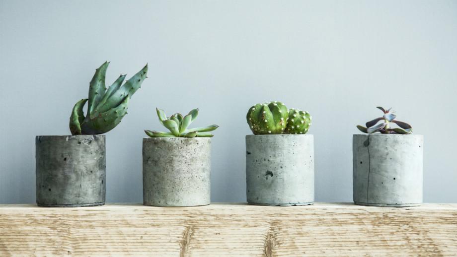 Rastliny odolné voči suchému vzduchu